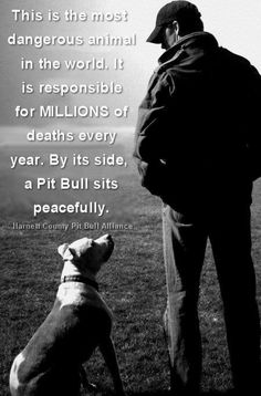 Humans are more dangerous than the beautiful pit bull. Think about that before criticizing and stereotyping this wonderful, loving animal