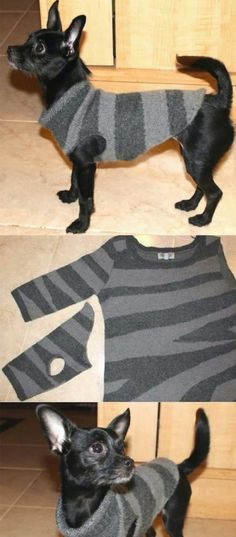 Easy Recycled Dog Sweater Tutorial Video