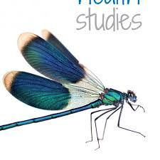 Image result for studies of insects