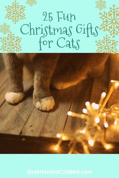 We have come up with a list of perfect presents that are certain to please! We are sure that you can find exactly what you are looking for on our list of Christmas gifts for kitties.