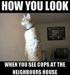 dog vs humor Cats are cute and sometimes unintentionally do stupid funny things, so we have collected some the funniest and most hilarious cat memes and pictures hope you will enjoy em. Funny Animal Memes, Funny Animal Pictures, Cat Memes, Funny Photos, Funny Animals, Funny Memes, Text Pictures, Animal Funnies, I Love To Laugh