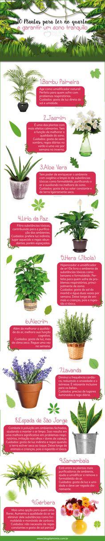 10 Plantas para ter no quarto e garantir um sono tranquilo