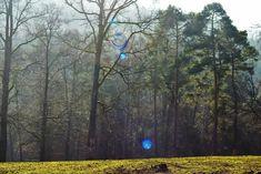 #tree🌳 #forest🌲 #nature #pap #animal #sun #soleil☀️ #trip🚗 #fauna #les animaux et nous #photographer #byalaincarlier #a World offre simplicité #happy d'Ay #forestia #belgium🇧🇪 #adventure parc #escalade ##climbing