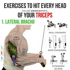 triceps tricep workout triceps exercise lateral tricep long head triceps medial triceps musclemorph