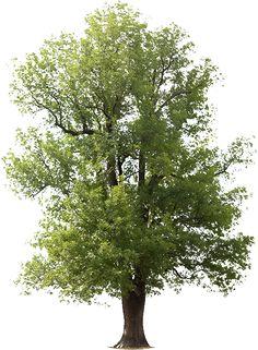 lee-s-tree-service_973555d4e2.png (462×629)