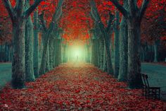 Beautifully Enchanting Pathways