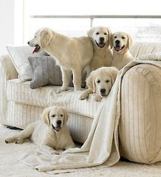 How many doggies do you see?