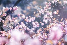 Spring by Olezzo on @creativemarket