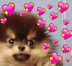 New Memes Apaixonados Kpop Ideas Bts Pictures, Reaction Pictures, Photos, Cute Love Memes, Funny Love, New Memes, Funny Memes, Heart Meme, Funny Iphone Wallpaper