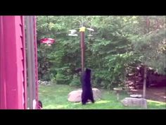 Bear Proof Birds Only Feeder Products Official Website