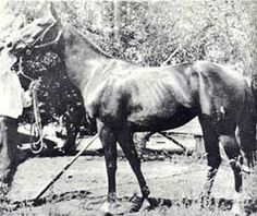 Della Moore - Foundation Quarter Horse DELLA MOORE ch. M, QUARTER HORSE, 1909 	Color: ch  AQHA # U0070181  Died 1928 Breeder: Ludovic Stemmons, Lafayette, LA. She foaled Joe Reed when owned by Henry Lindsey, Granger, TX., and Aloe, Grano de Oro, Joe Moore, and Panzarita while owned by Ott Adams of Alfred, TX. She was a fearless race mare and matriarch of the Quarter Horse world.