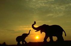 sun animals silhouette elephants baby elephant