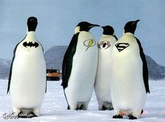 Penguin superheroes