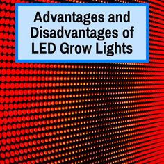 LED grow lights are gaining in popularity due to their many advantages over traditional plant lights, but they also have a few key disadvantages. Growing Plants Indoors, Plant Lighting, Light Pollution, Cannabis Growing, Traditional Lighting, Energy Use, Led Grow, Plant Growth, Photosynthesis