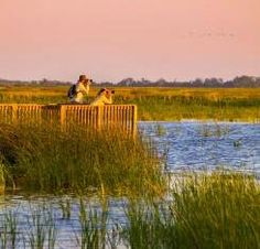 """""""Birding Adventures on the Pacific Flyway"""" featured in Via Magazine."""
