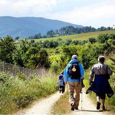 "The ""Gallop to the Scallop"" - The Camino de Santiago de Compostela in #Spain - #pilgrimage #walking #romancatholic #Spanish #seashell #StJames #Camino #Compostela #finisterre #travel #tourism #adventure #epicjourney"