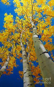 Poster featuring the painting Blue Sky And Tall Aspen Trees by Gary Kim