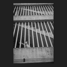 Mayu March 2015 #cat #blackandwhitephotography