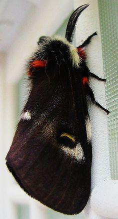 Moth moth moth