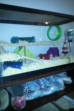 My kitten tipped over my hamster cage so I made him an aquarium habitat. Hot glue thim plywood for multiple levels get a small bird ladder to reach other levels #hamster #hamsterhabitat #stewie #hamsterlove #fishtank