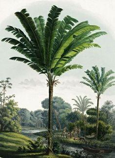 Martins Book of Palms