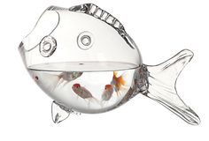Glass Fish Container on OneKingsLane.com I love it so much I think I need to get a couple of fish.