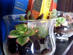 succulent terrarium.