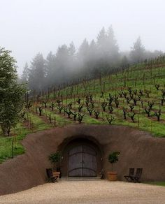 Bella's Winery (Dry Creek, in a cave which would be kinda cool.  Most cave wineries are expensive to taste at so this is an inexpensive way to do it, beautiful grounds, $10 tasting fee, wines are not phenomenal but are solid, known for Zin, great reviews for the total package, I think this is a MUST) 9711 W Dry Creek rd, 95448)