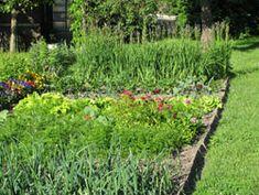 Anbauplan für Gemüse erstellen – Schritt für Schritt erklärt