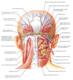 suboccipitals - Google Search