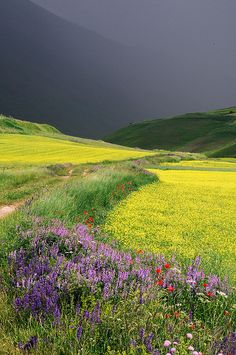 Wildflower field before a storm.