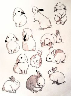 Ideas White Bird Art Inspiration For 2019 Cute Animal Drawings, Animal Sketches, Cute Drawings, Drawing Sketches, Drawing Ideas, Drawing Art, Bird Drawings, Drawings Of Animals, Bunny Sketches