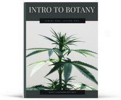 free-cannabis-botany.png
