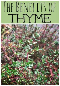 the-benefits-of-thyme