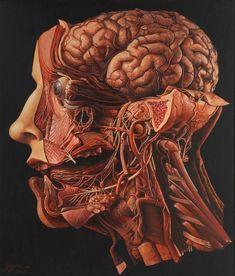Gothic Home Decor Vintage Oddities Curiosities Oddity Head Anatomy, Brain Anatomy, Body Anatomy, Anatomy Drawing, Anatomy And Physiology, Human Anatomy Art, Human Head, Human Body, Vintage Oddities