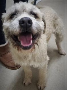 Is This Your Dog Hinkley Mixed Breed Male Date Found 01 24 2020 Breed Of Dog Mix Gender Male Closest Intersection Main St In 2020 Dogs Dog Ages Losing A Dog