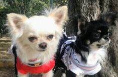 Miss Bianca and Miss Tiki ❤❤