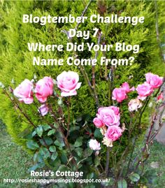 Rosie's Cottage: Blogtember Challenge Day 7: Where Did Your Blog Na... Blog Names, Blogging, Challenges, Cottage, Posts, Beach, Day, Messages, Seaside