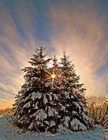 Winter sunrise through the 3 Pines