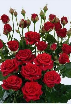 - Beautiful Flowers and Roses