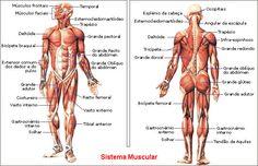 anatomia humana - Buscar con Google