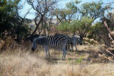 Groenkloof Nature Reserve (Pretoria, South Africa): Address, Phone Number, Hiking Trail Reviews - TripAdvisor