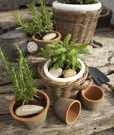 Combine plain clay pots with others inserted into these type of baskets, for a more interesting display