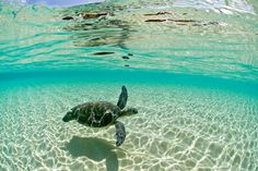 clark little sea turtles | Surf photographer Clark Little's pictures of the insides of waves as ...