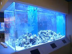 fish tank in hospital :D Acrylic Aquarium, Glass Aquarium, Home Aquarium, Reef Aquarium, Saltwater Aquarium, Aquarium Fish Tank, Aquarium Ideas, Large Fish Tanks, Cool Fish Tanks