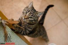 Giga #cute #cutecats #cats #caturday #kot #koty #neko #gato #katz #katzen #kittens #chat