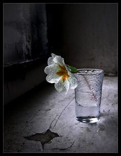 ....the flower was the first things she saw when she awoke and it gave her hope for tomorrow....
