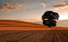 Google Image Result for http://wallpapersus.com/wp-content/uploads/2012/11/Lone-Tree-In-Field-Autumn.jpg