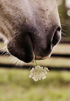 """When I see pictures like this I think, """"How pretty.""""  And then I think about how amazing that photographer is for catching this photo before the horse devours this flower messily then doesn't like the taste and not so gracefully spits it back out all over some human's shirt."""