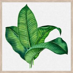 Instil stylish tropical vibes into your interior aesthetic with the hand-painted design of the Tropical Leaves Framed Wall Art from Wall Style. Banana Palm, Plant Tattoo, Painted Leaves, Hand Painted, Watercolor Artwork, Tropical Leaves, Botanical Illustration, Botanical Prints, Plant Decor